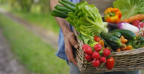 real food diet personalized for your family