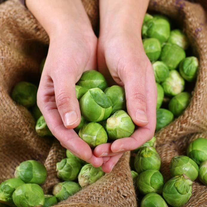 Handful of Fresh Brussels Sprouts