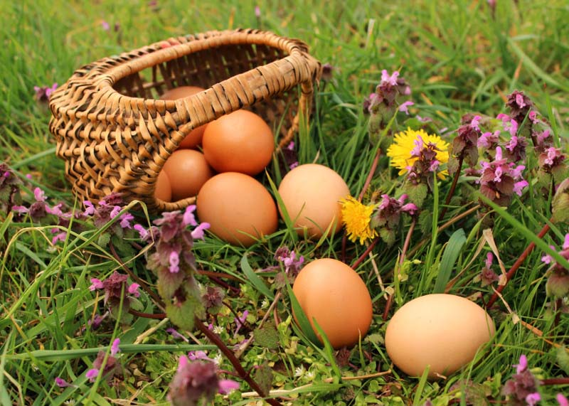 Basket of Eggs in a Pasture