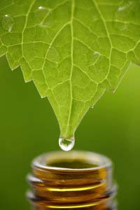 Drop of Essential Oil