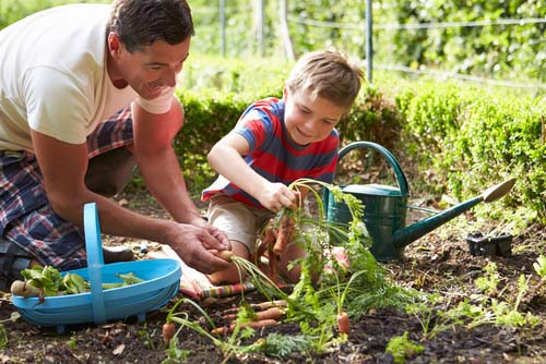 Father and Son Working in Home Garden