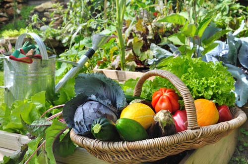 Fresh Vegetables from Container Garden